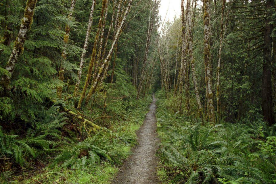 Dež v gozdu
